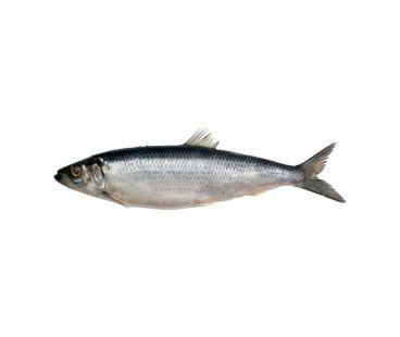 Свежемороженая Рыба Сельдь с головой с/м