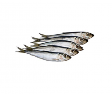 Свежемороженая Рыба Салака 16+ LANSI Финляндия с/м
