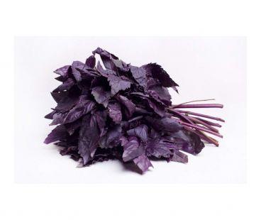 Базилик  фиолетовый  свежий