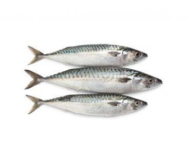 Свежемороженая Рыба Скумбрия с головой 500+ LOFOTEN VIKING с/м